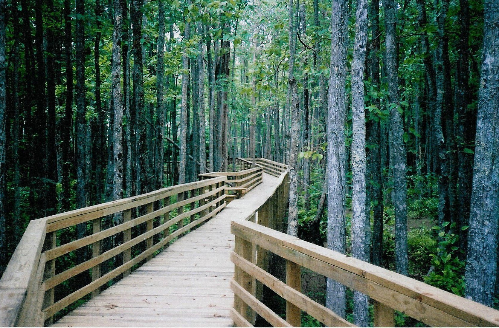 passerelle en bois dans une forêt pour illustrer l'histoire des lunettes à Puisserguier