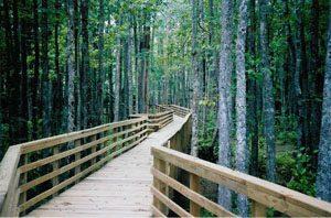 Image d'une passerelle en bois dans une forêt